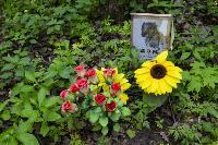 Кладбище домашних животных в Туле, Фото: 4
