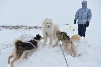 Праздник северных собак на Куликовом поле , Фото: 32