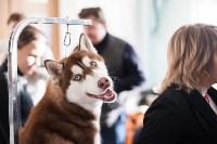 Выставка собак в Туле, 29.11.2015, Фото: 32