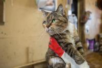 Волонтеры спасли кошек из адской квартиры, Фото: 50