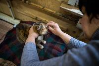 Волонтеры спасли кошек из адской квартиры, Фото: 77