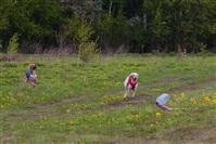В Туле состоялись собачьи бега, Фото: 44