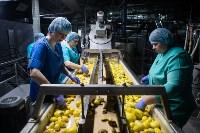 Как производится картофельное пюре быстрого приготовления?, Фото: 12
