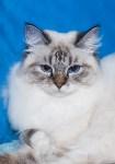 Выставка кошек в Искре, Фото: 21
