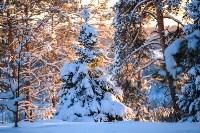 Снежное Поленово, Фото: 69