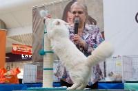 Выставка кошек в Туле, Фото: 77