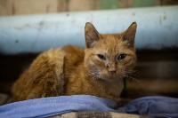 Волонтеры спасли кошек из адской квартиры, Фото: 21