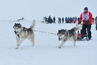 Праздник северных собак на Куликовом поле , Фото: 81