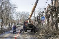Кронирование деревьев в Туле: что можно, а чего нельзя?, Фото: 19