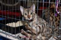 Выставка кошек в Туле, Фото: 6