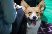 Выставка собак в Туле, Фото: 11