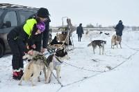 Праздник северных собак на Куликовом поле , Фото: 38