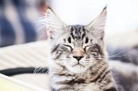 """Выставка """"Пряничные кошки"""". 15-16 августа 2015 года., Фото: 45"""