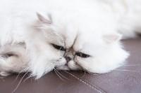 Выставка кошек в МАКСИ, Фото: 33