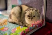 Пряничные кошки, Фото: 2