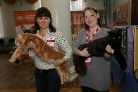 Выставка кошек. 21.12.2014, Фото: 5