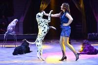 Цирковое шоу, Фото: 48