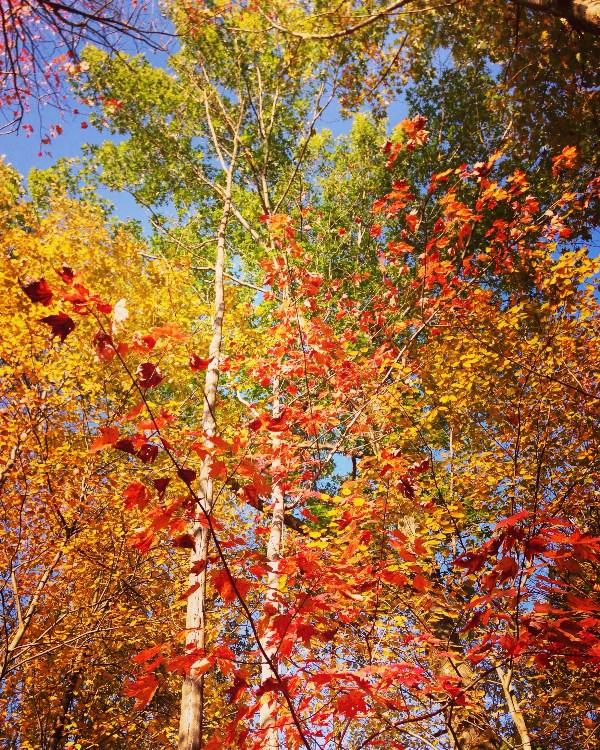 Шуршащие краски осени
