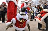 Рождественские пингвины, Фото: 6