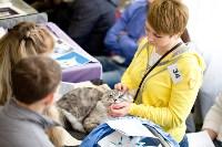 Выставка кошек. 4 и 5 апреля 2015 года в ГКЗ., Фото: 35