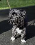 Рейд по выгулу собак в Центральном парке, Фото: 5