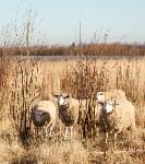 Семён Яблоновский и его ферма, Фото: 24