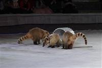 Губернаторская ёлка в цирке. 25 декабря, Фото: 30