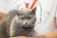 Выставка кошек в МАКСИ, Фото: 81