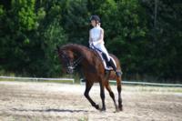 В Ясной поляне стартовал турнир по конному спорту, Фото: 14