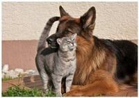 Дружба животных, Фото: 4