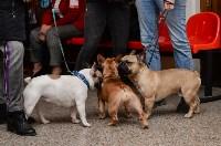 """Выставки собак в ДК """"Косогорец"""", Фото: 62"""
