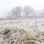 Ледяное утро в Центральном парке, Фото: 3