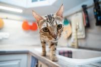 Экзотические животные в квартире, Фото: 50