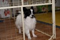 Выставка собак DogLand, Фото: 4