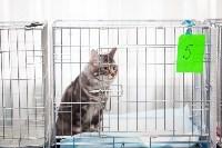 Международная выставка кошек. 16-17 апреля 2016 года, Фото: 66