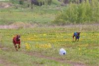 В Туле состоялись собачьи бега, Фото: 34