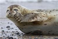 Жизнь тюленя: мечта!, Фото: 8