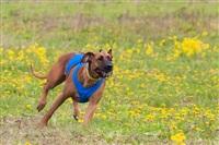 В Туле состоялись собачьи бега, Фото: 35