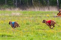 В Туле состоялись собачьи бега, Фото: 28