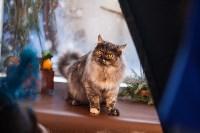 В Туле прошла выставка «Пряничные кошки» , Фото: 28