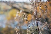 Маршрут выходного дня: где отдохнуть в Тульской области?, Фото: 38