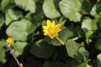 Краски весны в Туле, Фото: 4