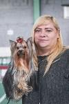 Выставка собак в Туле 26.01, Фото: 64