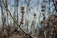 Весна 2020 в Туле: трели птиц и первые цветы, Фото: 16