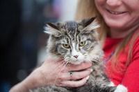 Выставка кошек в МАКСИ, Фото: 53