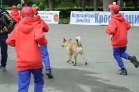 В Тульской области прошёл «Кросс нации-2016», Фото: 53