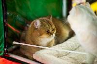 Пряничные кошки, Фото: 9