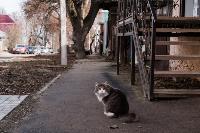 Тульские котики, Фото: 70