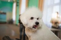 Выставка собак в Туле, 29.11.2015, Фото: 72