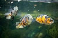 Тульский экзотариум: животные, Фото: 1